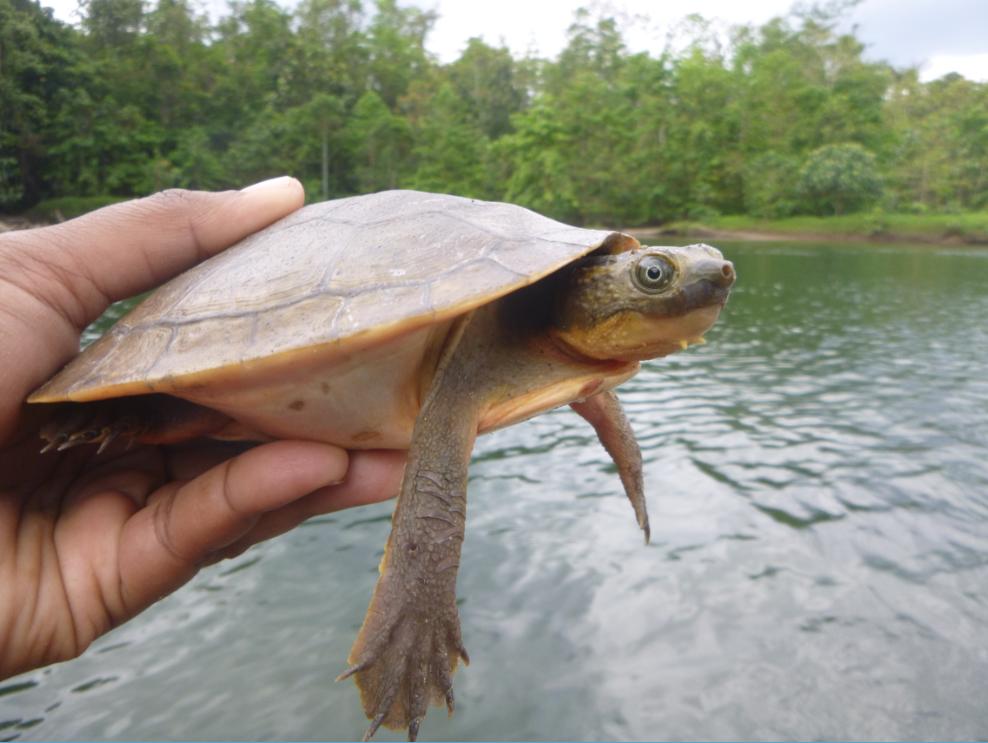 Turning up turtles