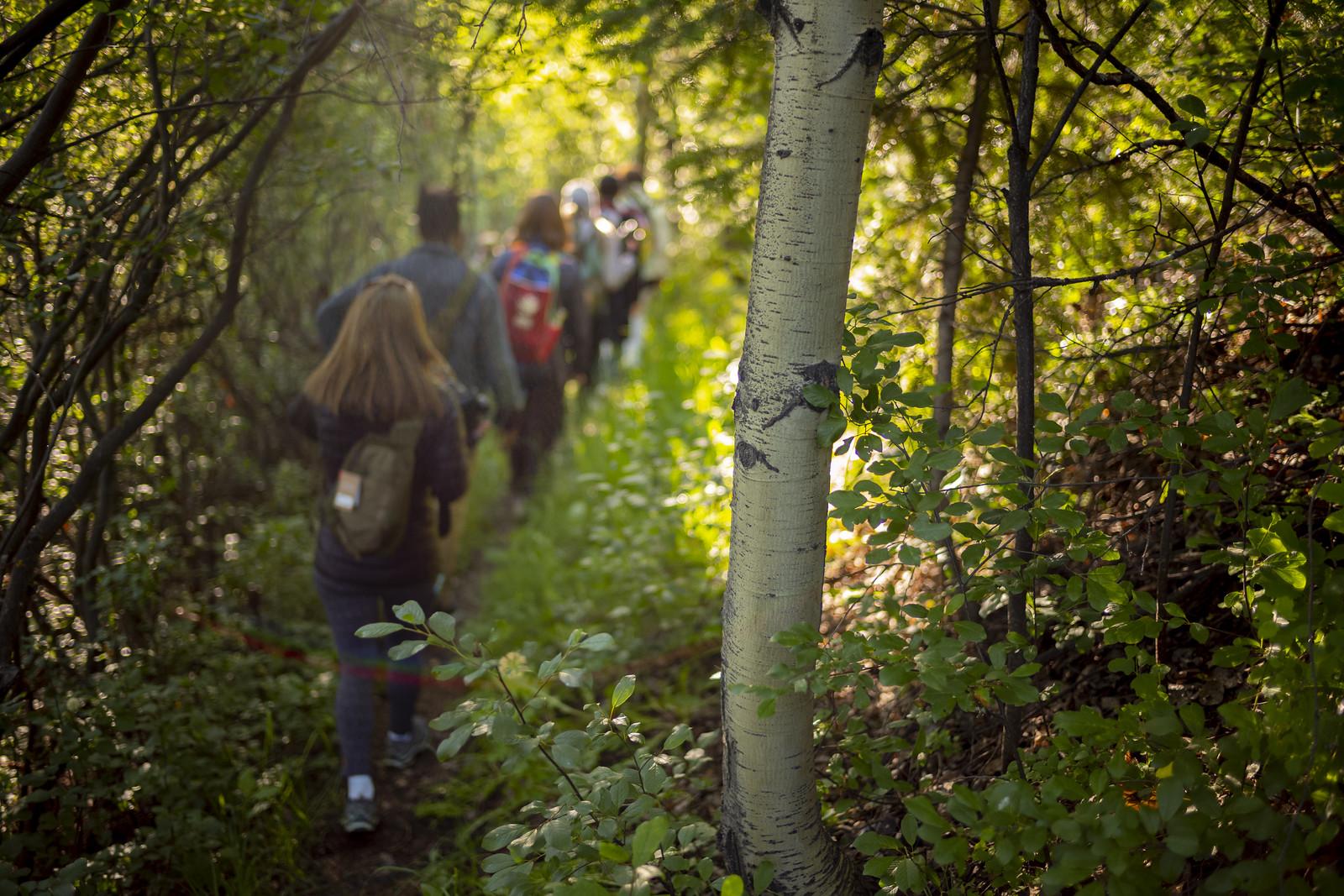 aspen trees, Aspen Ideas Festival