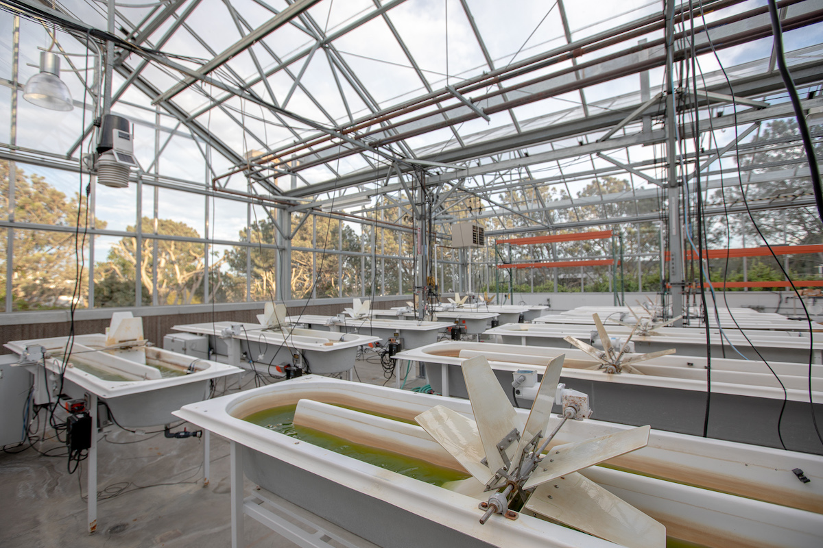In the greenhouse, small ponds are used to test algae at a larger scale than in the lab before they move to the big outdoor ponds.