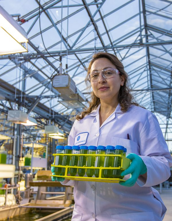 From petri dish to pond: Algae farming, in pictures
