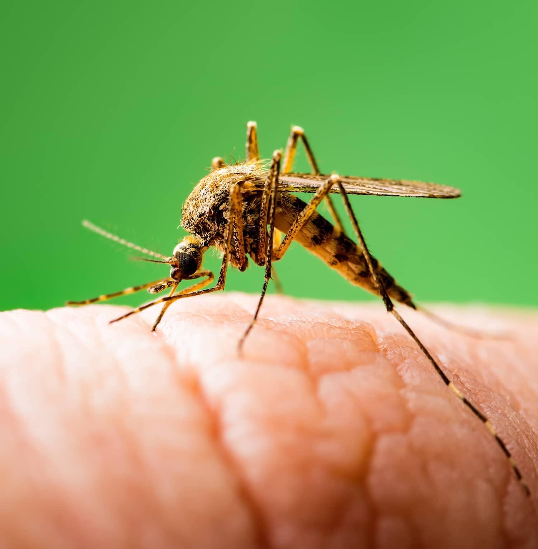 20 years of combating malaria